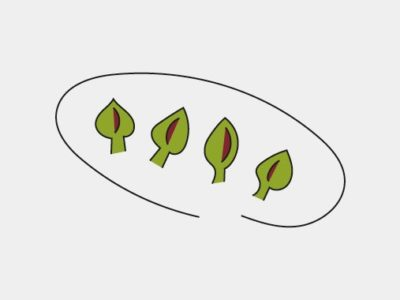 illustration of artichokes on a plate