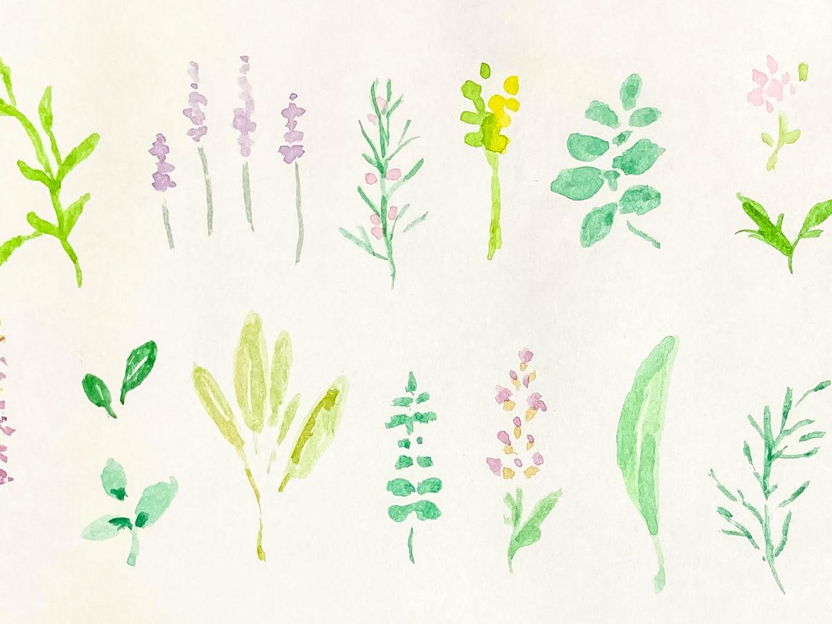 Watercolor illustration of fresh herbs